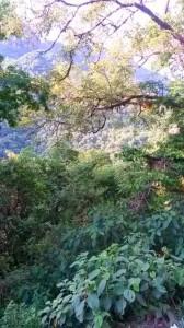 yunga paisaje