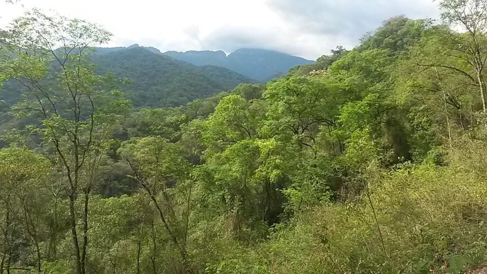 yunga verde