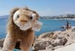 Lion en Cannes